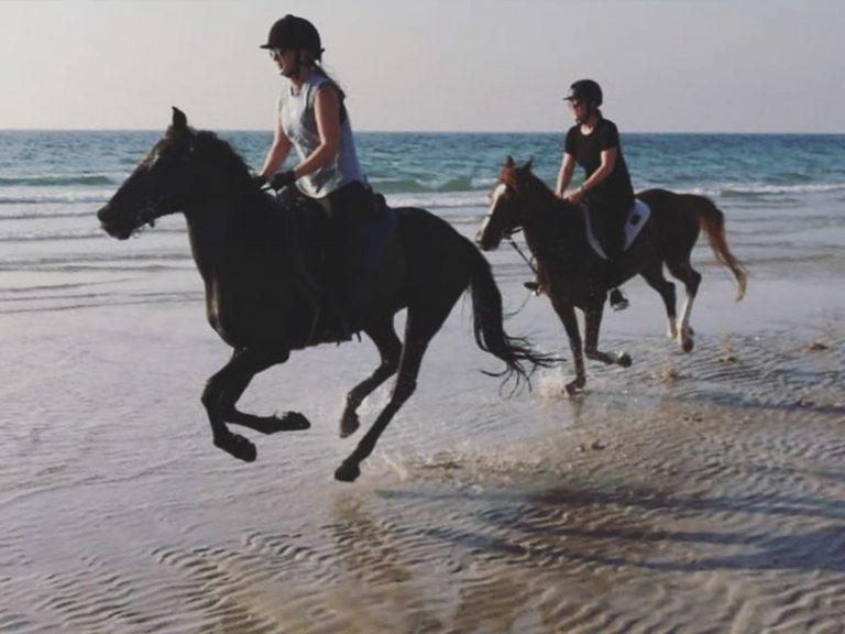 DVR equestrian